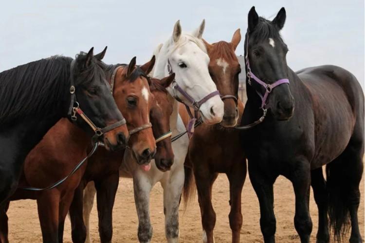 Самые популярные породы лошадей