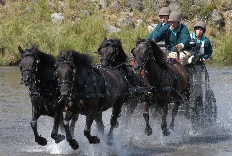 Соревнование конных экипажей