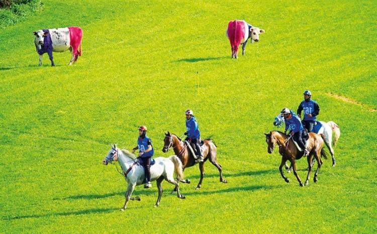 Пробеги на лошадях фото