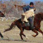Борьба за тушу козла фото