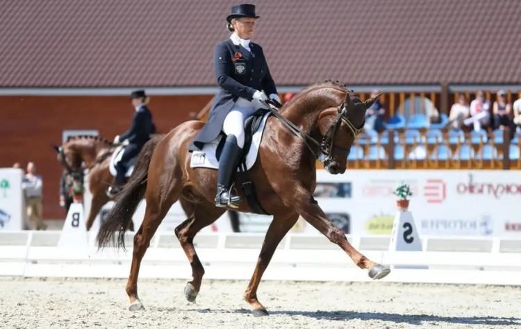 Фото соревнований выезки на лошадях