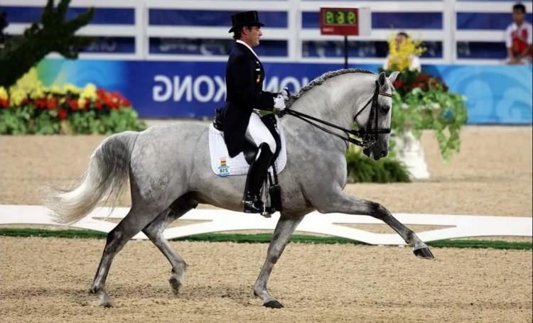 Выезка фото лошади