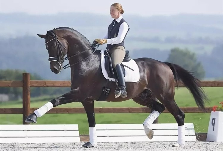 Выездка на коне