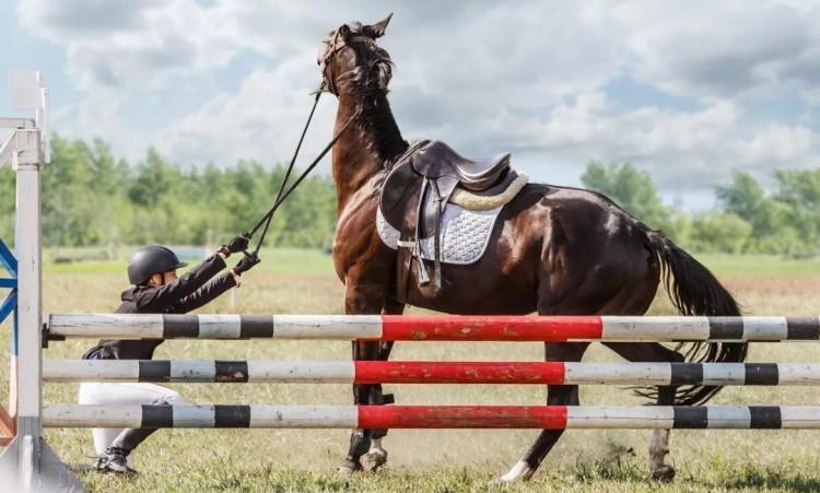 Конкурная лошадь
