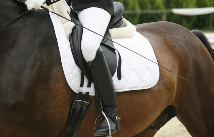 Хлыст для конного спорта