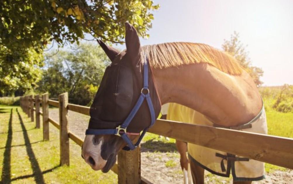 Защитная маска для лошади