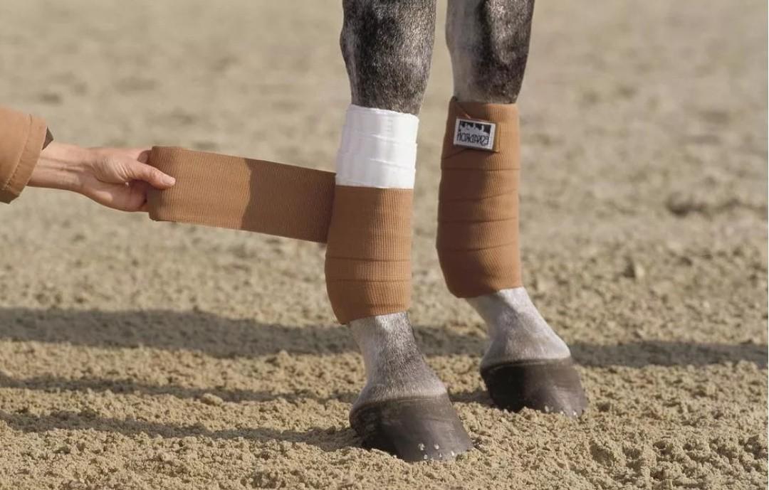 Бинты на ногах лошади