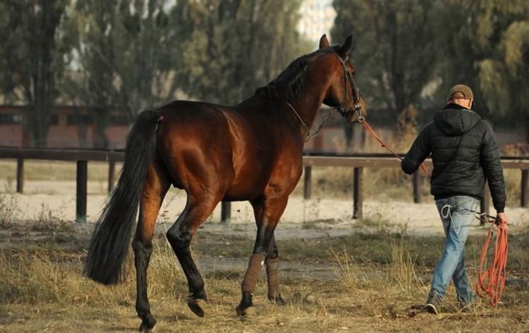 Лошадь идёт шагом