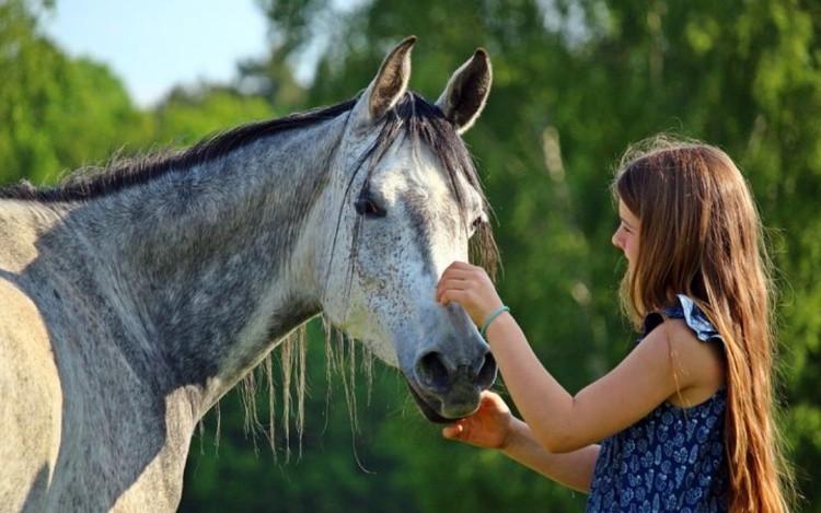 Как общаться с лошадью