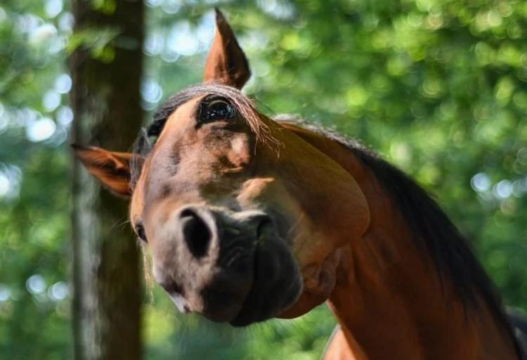 Поведение лошади