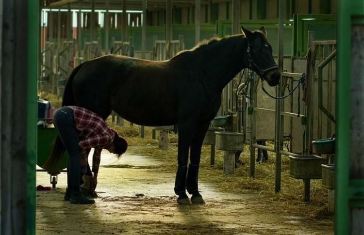 Чистка коня в конюшне