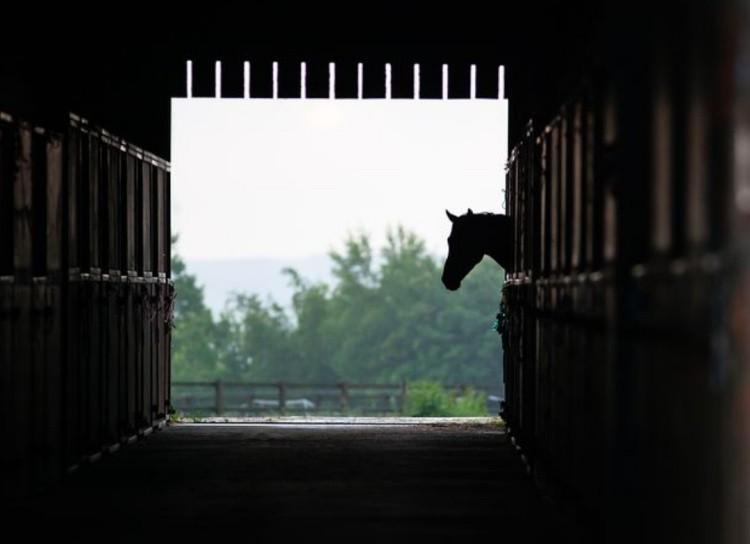 Содержание лошади в конюшне