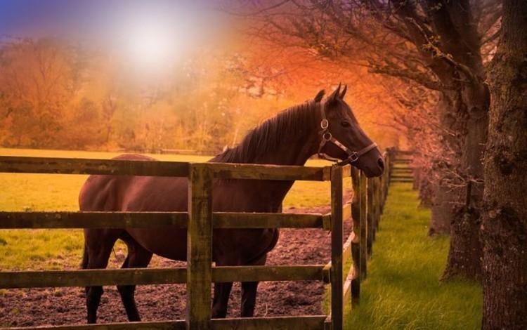 Конь в загоне