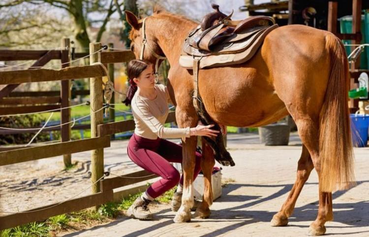 Школа верховой езды: как седлать и уздать лошадь?