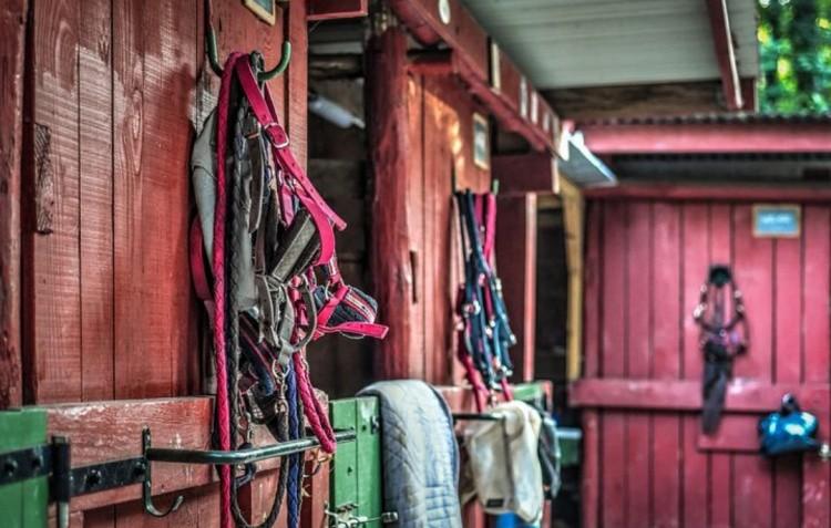 Уздечки для лошадей