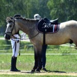 Лошадь под седлом