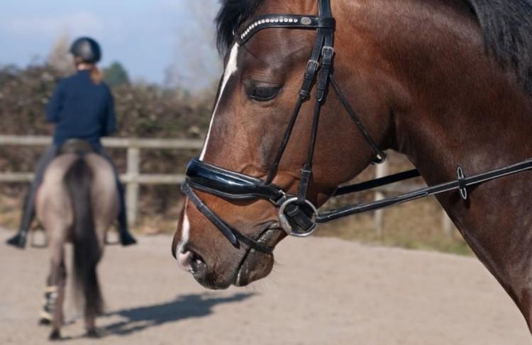 Обузданная лошадь