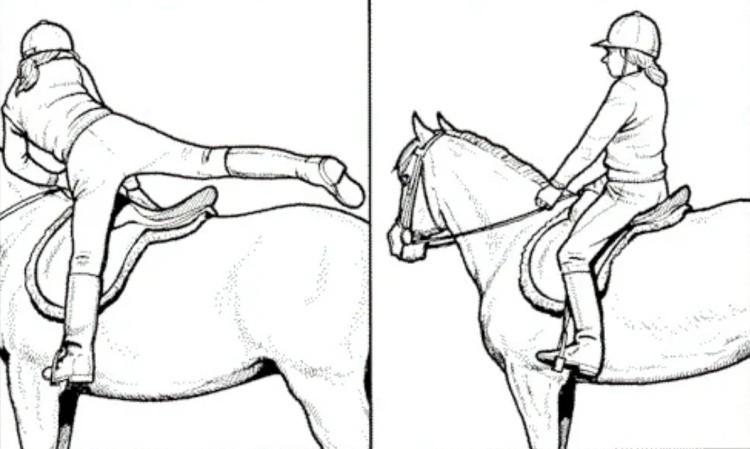 Как сесть верхом на лошадь