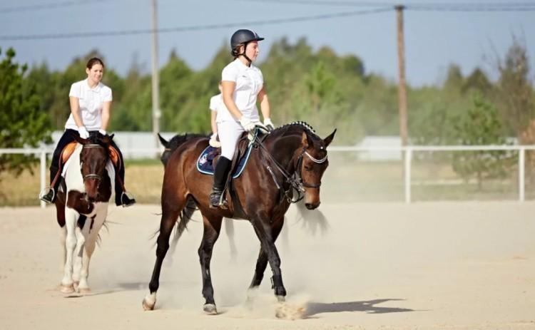 Занятия конный спорт