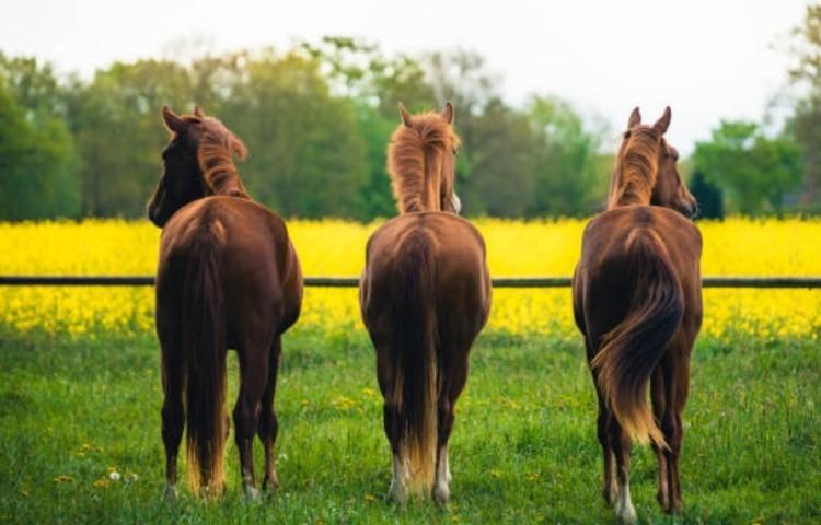 Покупка лошади