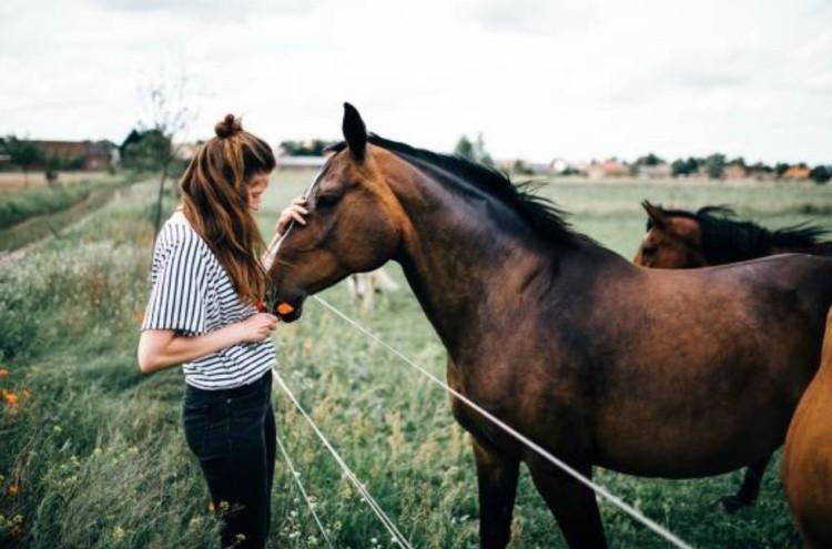 Как купить лошадь