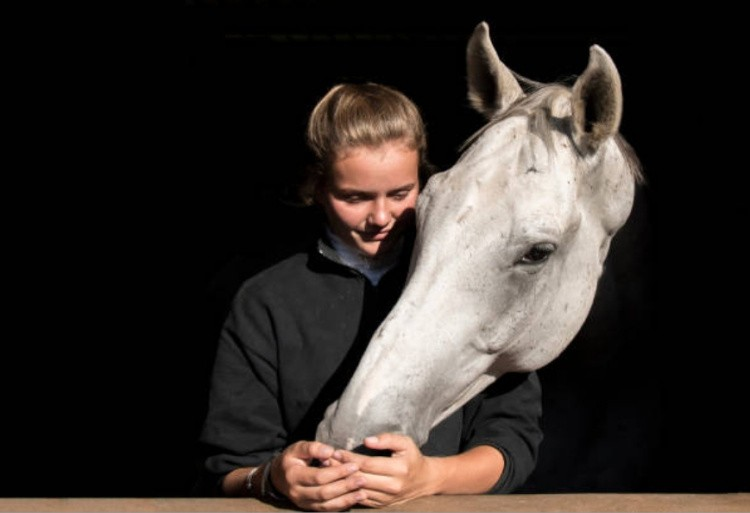 Лошадь фото