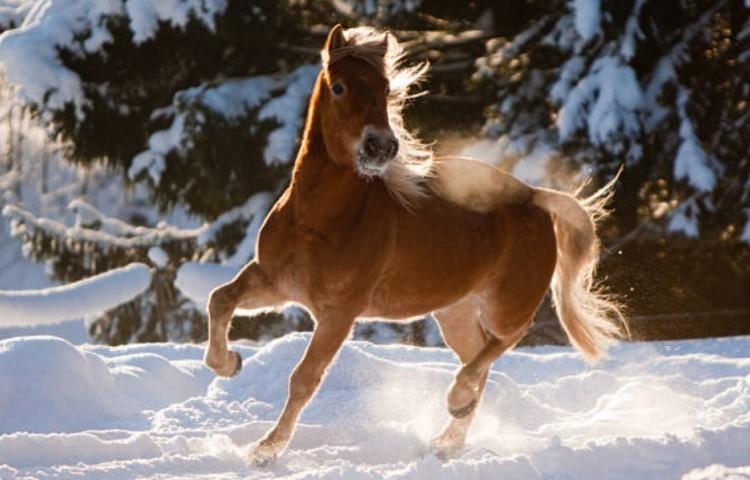 Экстерьер лошади