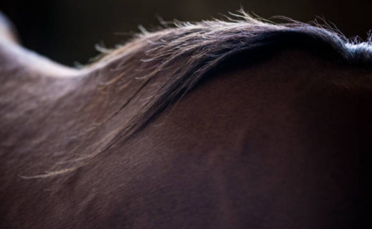 Спина лошади