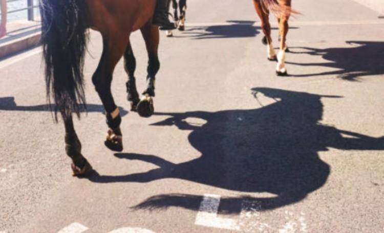 Задние ноги лошади