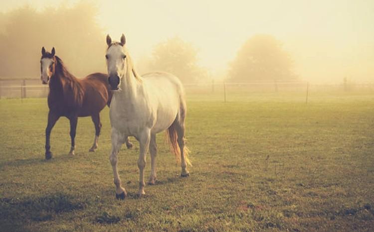Лошади на прогулке