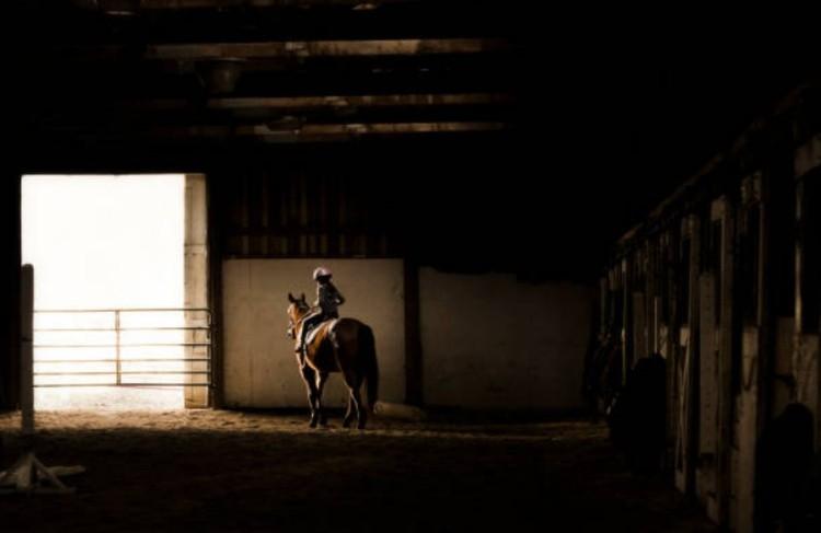 Лошадь конюшня