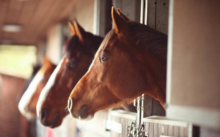 Лошади в стойле