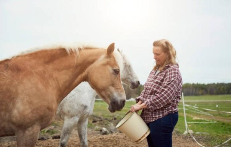 Поить лошадь