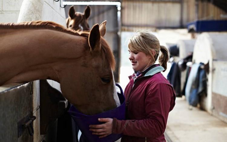 Вода для лошадей