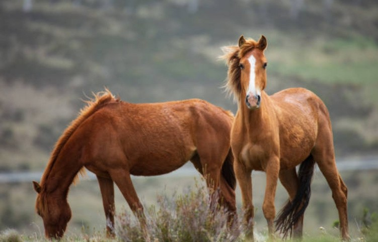 Кормление и поение лошади