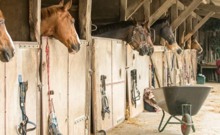 Лошади на конюшне