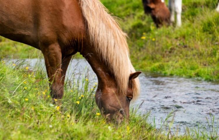 Лошадь у реки