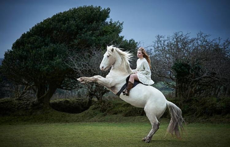 Верхом на белой лошади