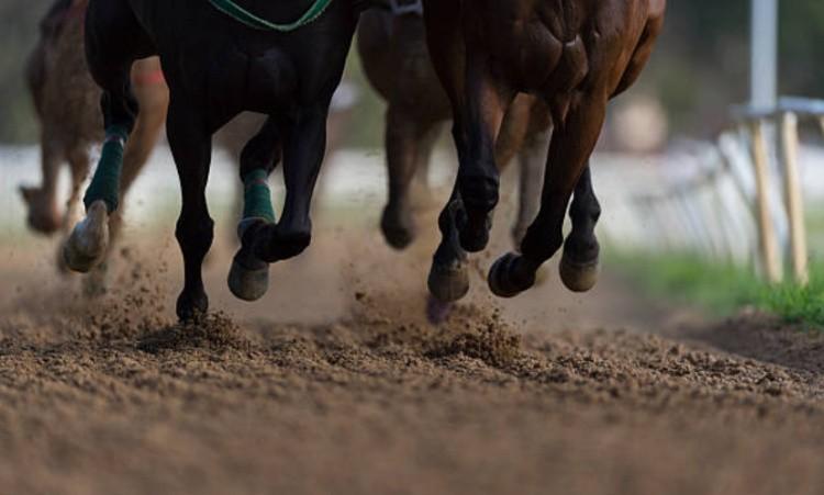 Ноги лошадей