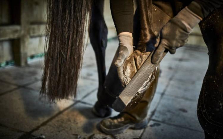 Расчиска копыт у лошади