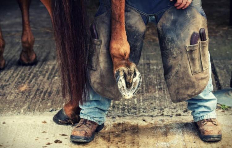 Копыта лошади фото