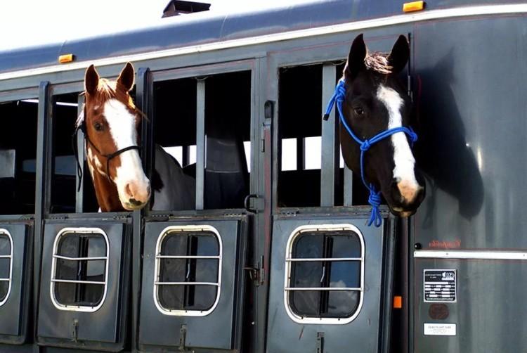 Лошади в поезде