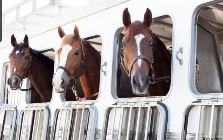 Вагон с лошадьми