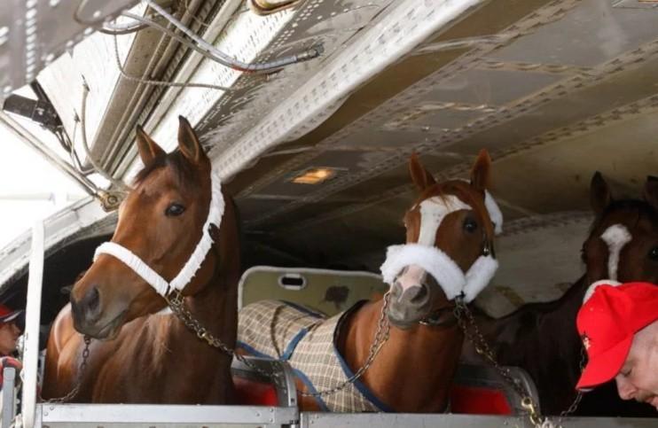 Лошадь в самолете