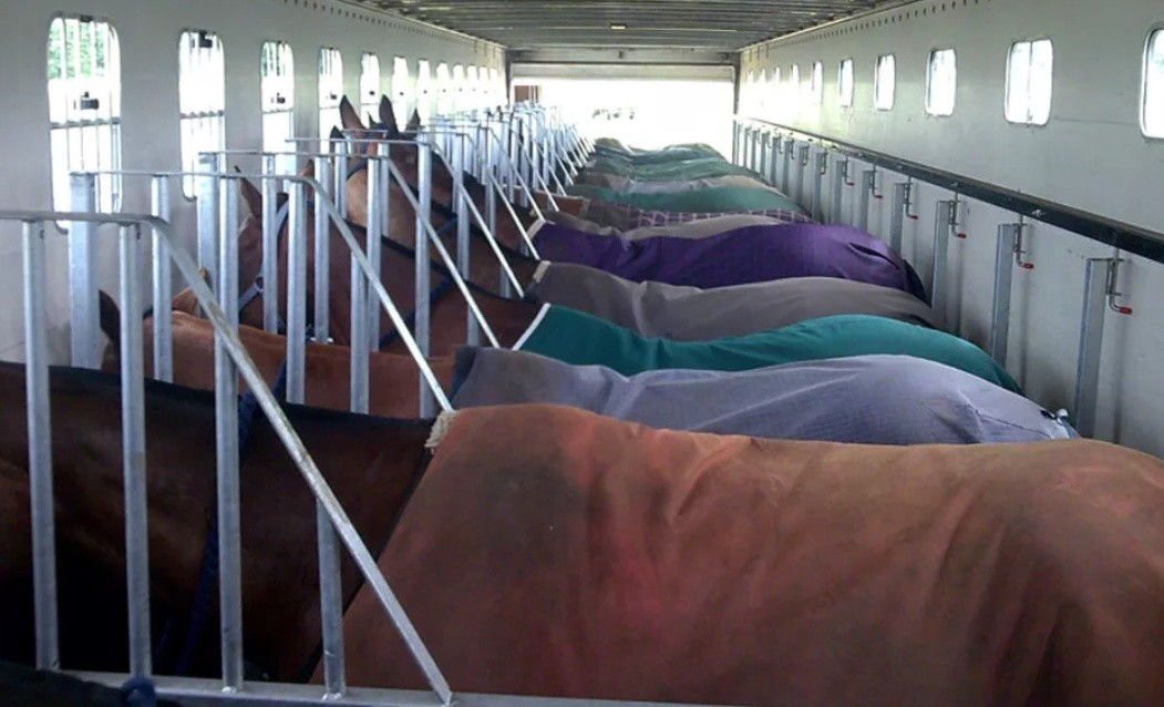 Перевозка лошадей фото