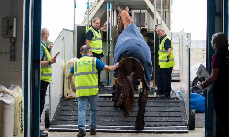 Перезозить лошадь