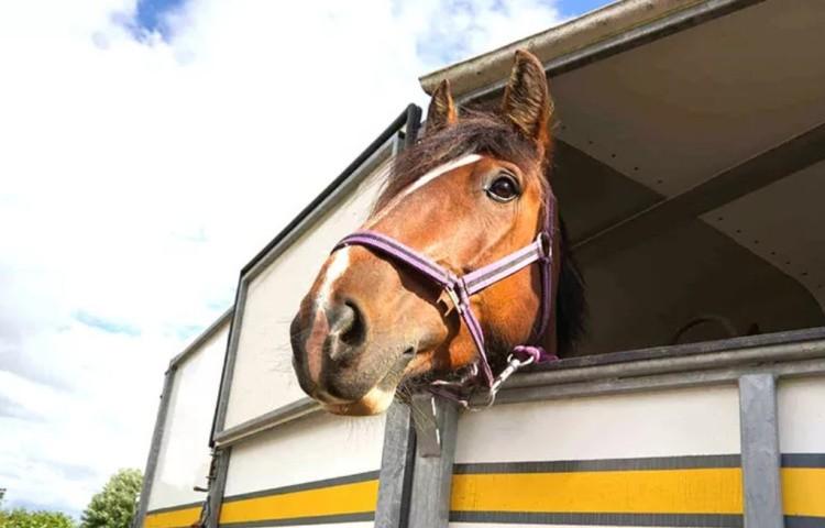 Правильная перевозка лошадей