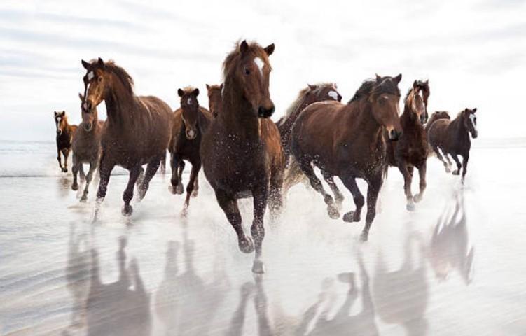 Экстерьерная съемка лошади