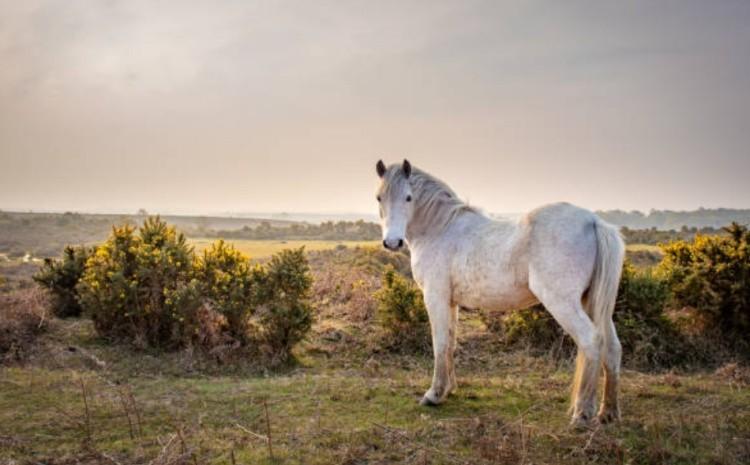 Съемка лошади