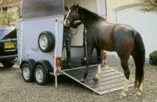 Перевозка лошадь
